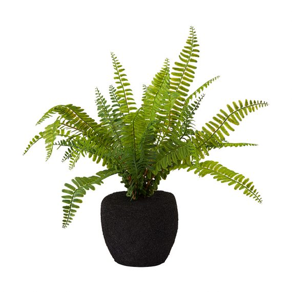 Potted Fern – Small