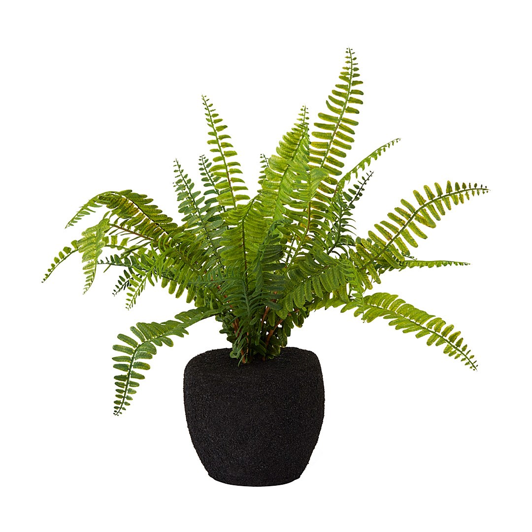 Potted Fern Small Hire Society