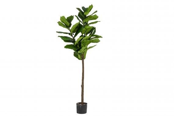 Plant – Fiddle Leaf Fig Medium