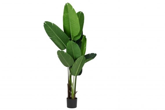 Plant – Banana Leaf Large