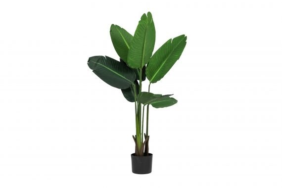 Plant – Banana Leaf Medium