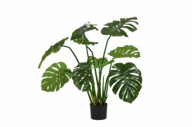 Plant – Monstera Small